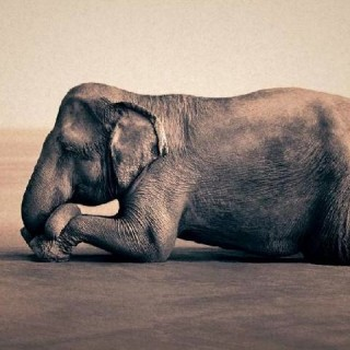 'Ashes & Snow' by Gregory Colbert !