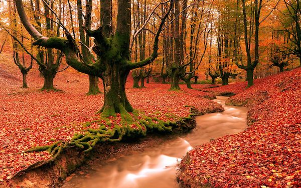 foret-rouge-automne