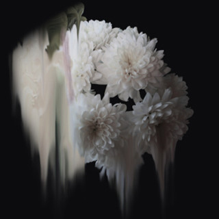 ART & CULTURE : Abstract Flowers