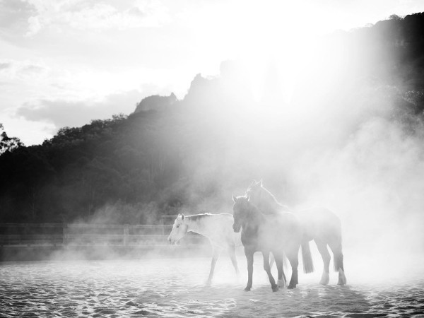 Emirates-OneOnly-Wolgan-Valley-Wild-Horses-BW-800x600