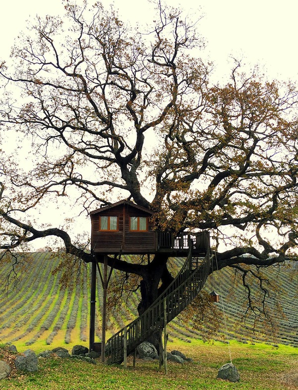 Wooden-Tree-House-in-Tuscany2-900x1177